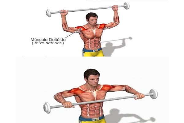 musculo-deltoide