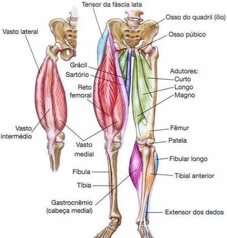 Anatomia das Pernas