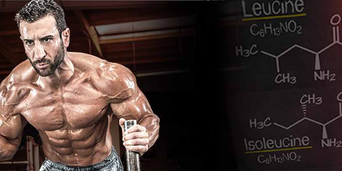 aminoacido-leucina-para-ganho-de-massa-muscular