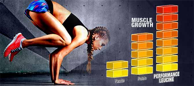 Nível de Crescimento Muscular com a Leucina