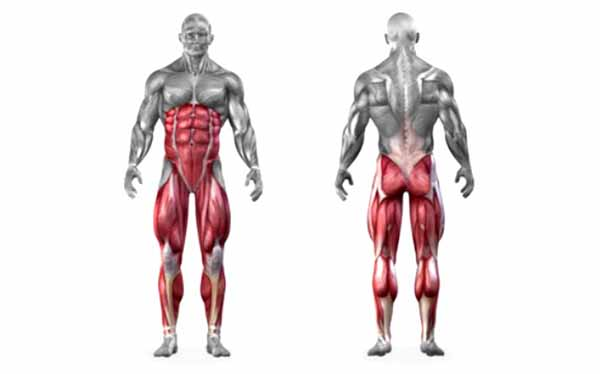Músculos solicitados no agachamento