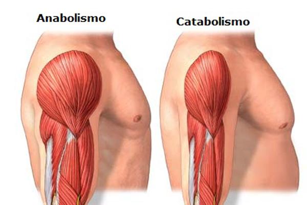 catabolismo-anabolismo