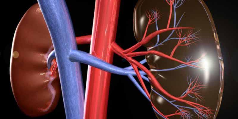 be7865805 Proteínas X problemas renais  Você precisa mesmo de tanta proteína