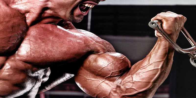 treinamento-bíceps