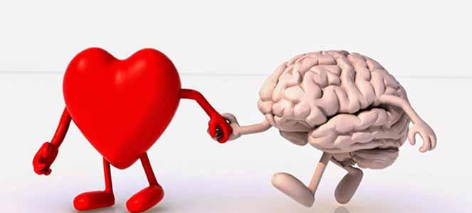 Coração e Cérebro amigos