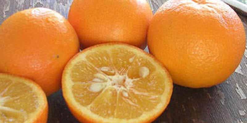 laranja-amarga-sinefrina