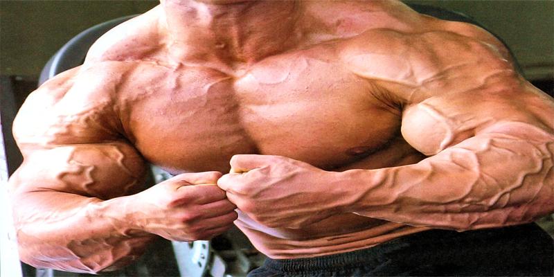 vascularizacao-veias-musculacao