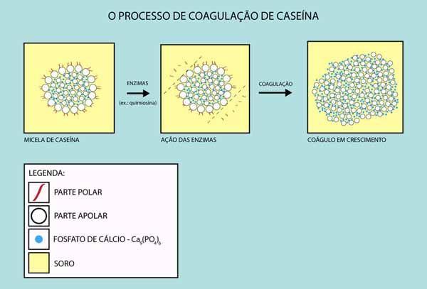 Processo de Coagulação da Caseína