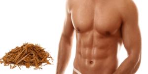 Imagem de Yohimbe: Diminiu a gordura corporal e aumenta a massa muscular
