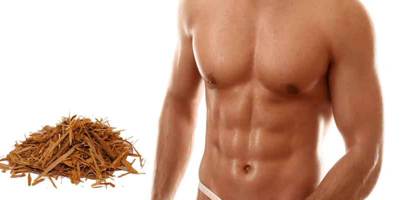 yohimbe-diminui-a-gordura-e-aumenta-a-massa-magra