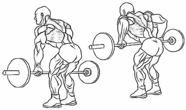 Exercício Remada curvada com barra livre (pegada pronada)