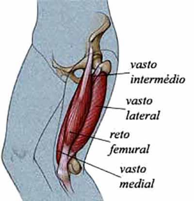 Anatomia do Quadríceps Femoral