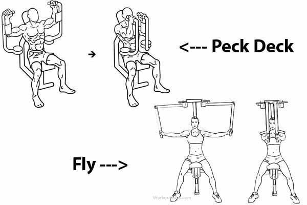 Diferença entre Exercício Peck Deck e Exercício Fly