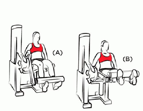 Execução Correta da Cadeira Extensora