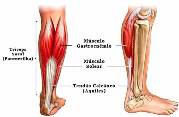 Anatomia das Panturrilhas