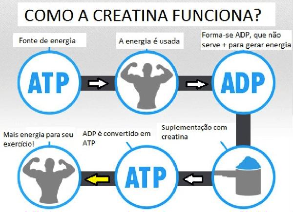 Infográfico Explicando o Funcionamento da Creatina
