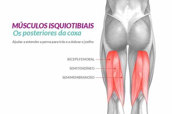 Anatomia dos Posteriores da Coxa