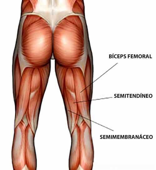 Anatomia Posteriores de Coxa