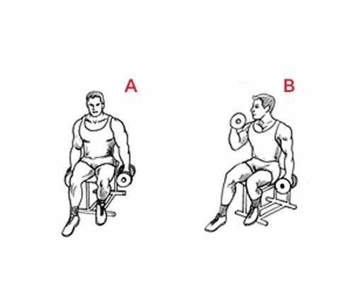 Exercício Rosca alternada com halteres sentado