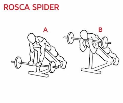 Exercício Rosca Spider com barra reta