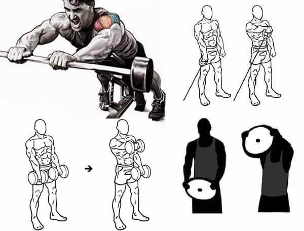 Variações do Exercício Elevação Frontal