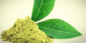 Imagem de Teacrina: Um novo estimulante para substituir a cafeína!