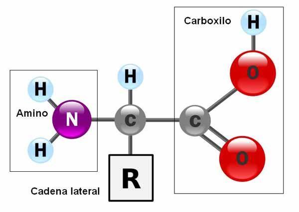 Fórmula Química dos Aminoácidos