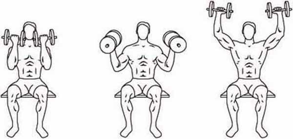 Exercício ombro: Arnold Press