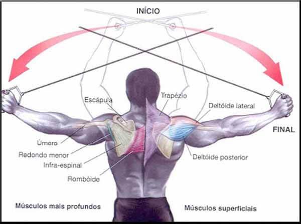 Exercício para ombros: crucifixo inverso com cabos na polia