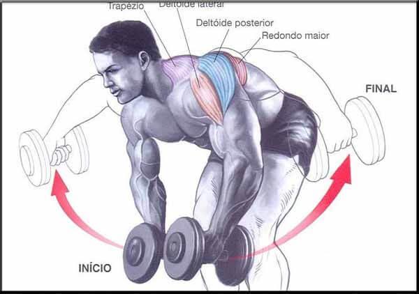Exercício para ombros: crucifixo invertido com halteres (corpo inclinado)