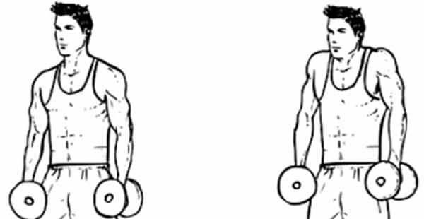 Exercício para ombro: encolhimento com halteres sentado