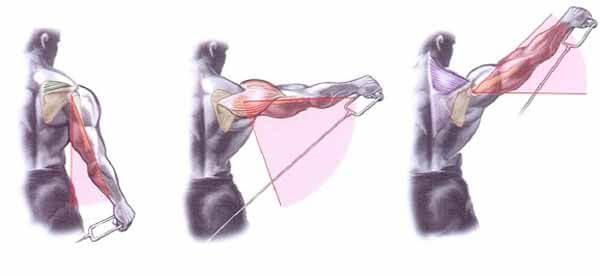 Exercício para ombros: elevação lateral com cabos (por trás do corpo)