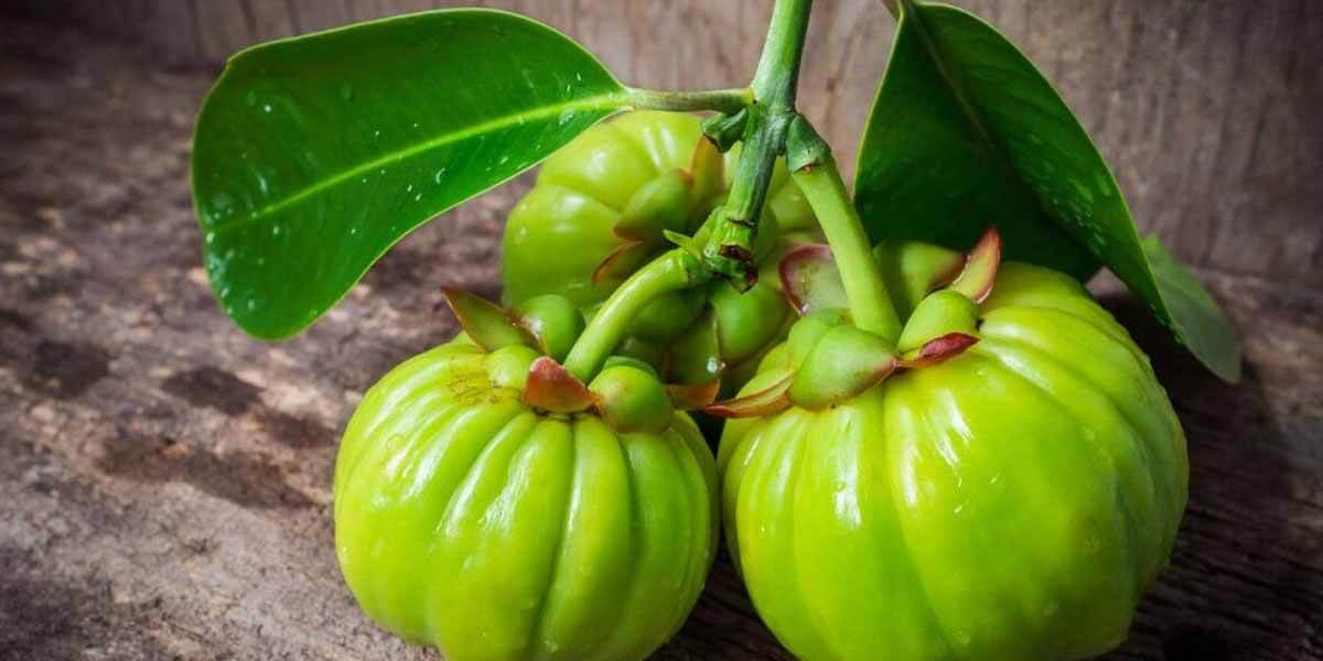 fruto-garcinia-cambogia