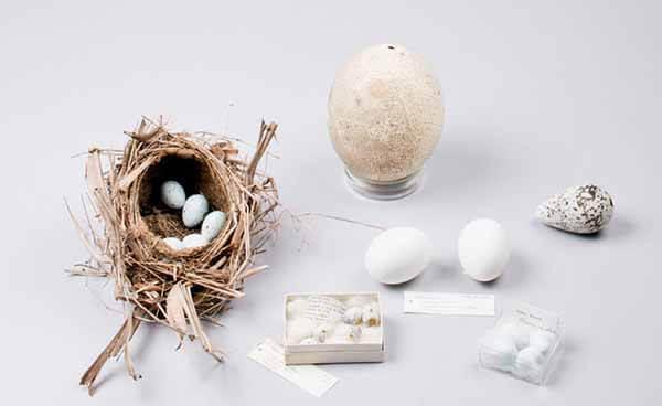ovos de diferentes aves