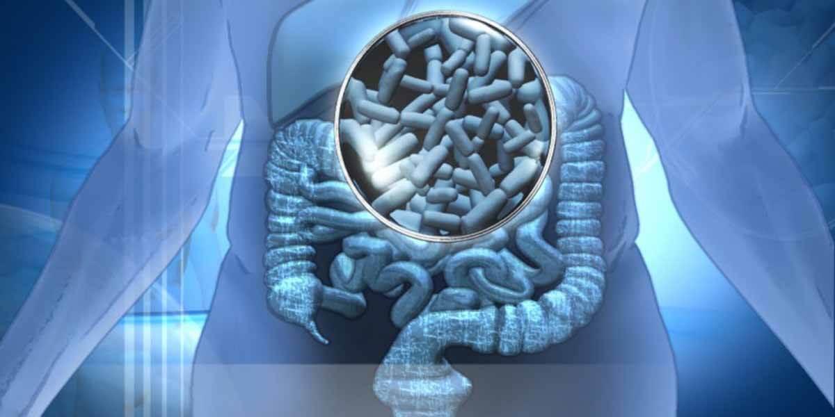 probioticos-auxiliam-no-fincionamento-da-flora-intestinal