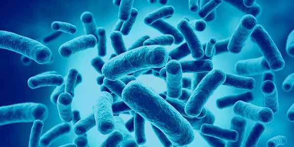 Probióticos são bactérias que fazem bem para a saúde