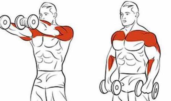 exercício ombro elevação frontal simultânea