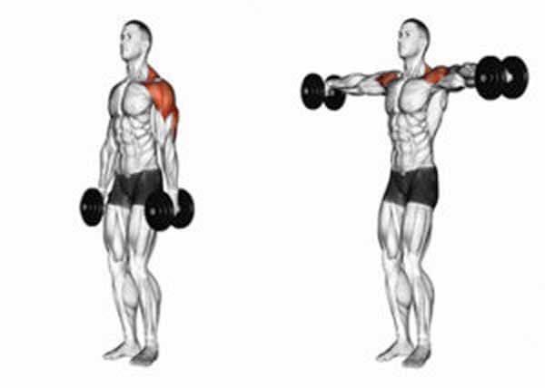 exercício para ombros elevação lateral