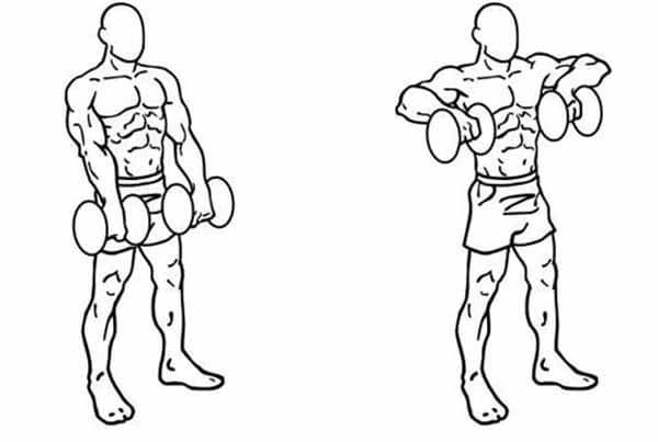 exercício para os ombros remada alta com halteres