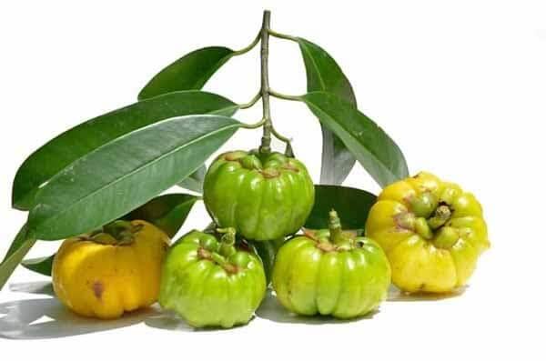 fruto da garcinia cambogia