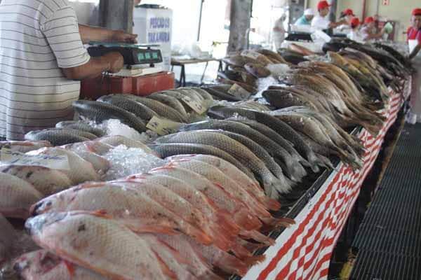 tome cuidado com a procedência dos seus pescados
