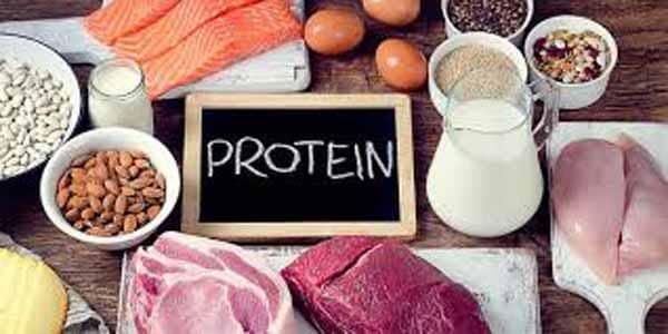 importância das proteínas na dieta