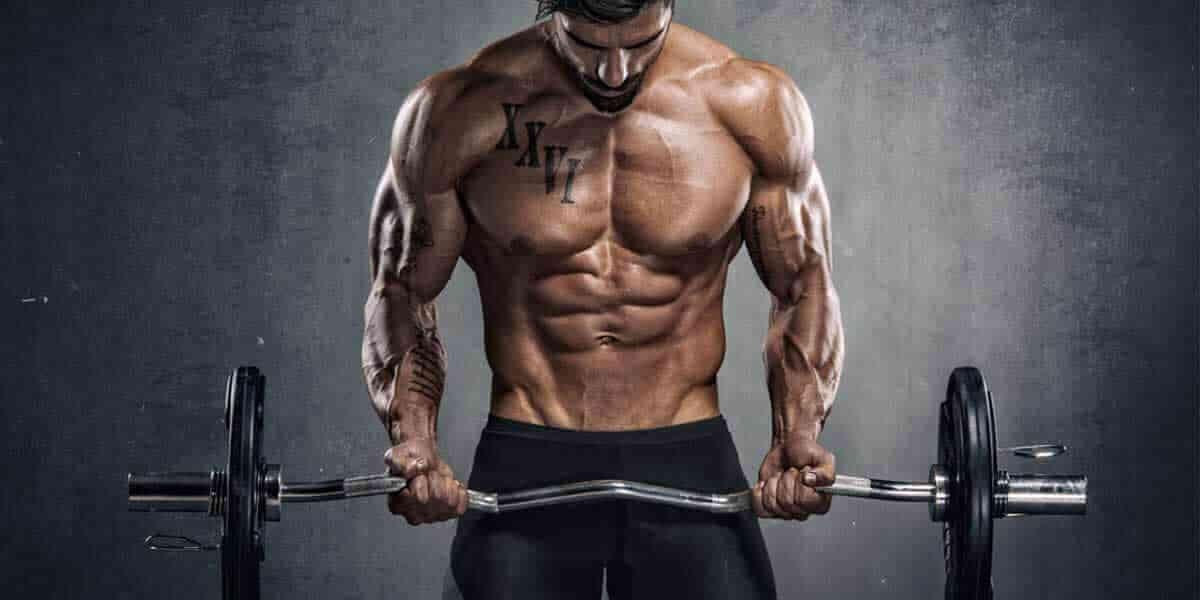 dicas de musculacao