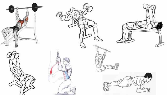 exercícios peitoral abdomen