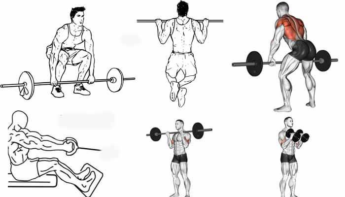 exercicios costas biceps