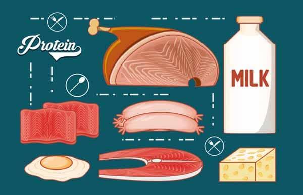 quantidades ideais de proteínas