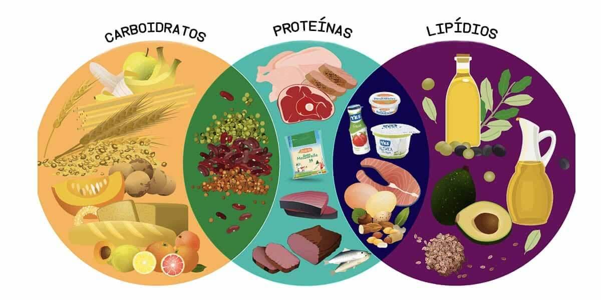 Proteínas, Carboidratos e Gorduras, Macronutrientes Importantes para a Vida