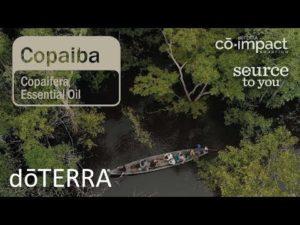 Imagem de Óleo Essencial de Copaíba: Para que serve e beneficios ?