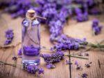 薰衣草精油的图像:它的用途和好处是什么?
